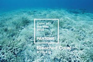 Запропонований колір 2020 року - Bleached Coral, знебарвлений корал