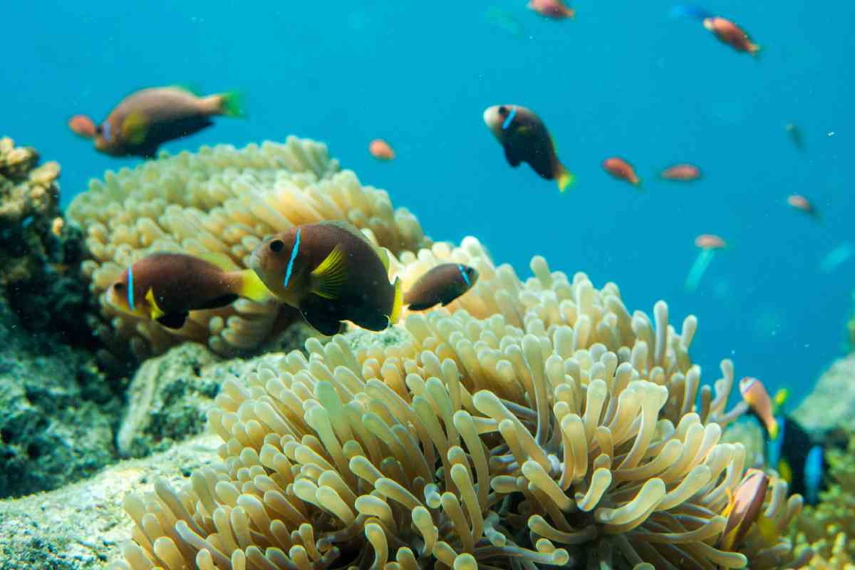 Риф погибает от солнцезащитного крема