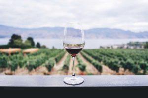 Виноделие страдает от климатических изменений