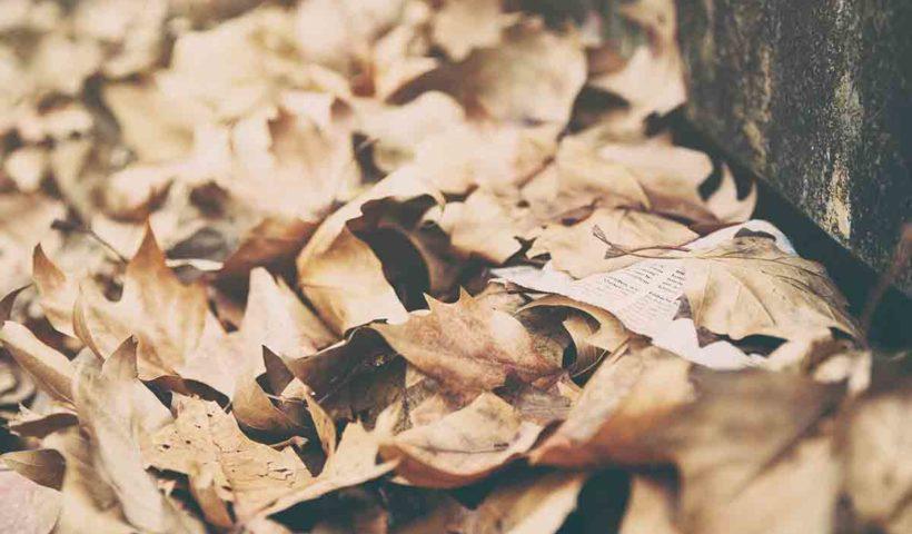 Опавшие листья в лесу