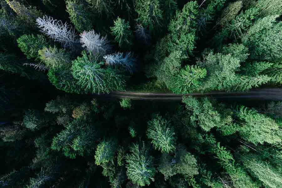 Украинский лес