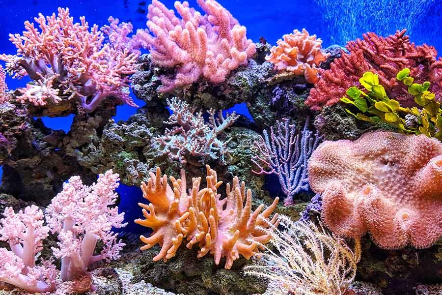 Кораловый риф