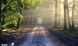 Єкостежка в Голосеевском лесу