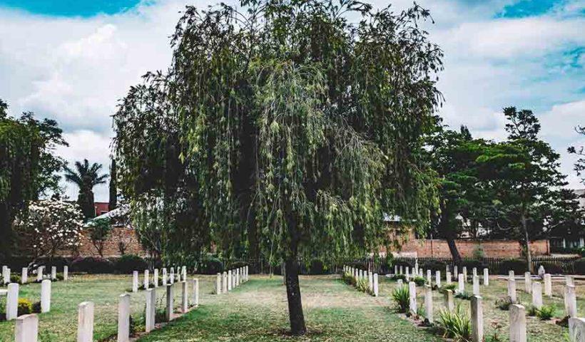 компостирование тел вместо кладбища