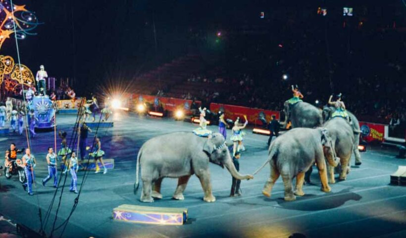 Заборона використання тварин у цирку